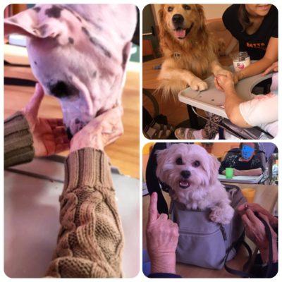 progetto pet therapy casa di riposo RSA Villa Serena Magliano Alfieri
